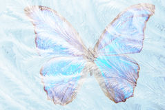 Butterfly for freezing glass Stock Photography