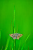 Butterfly froze motionless Stock Photography
