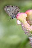 Butterfly in garden Stock Images