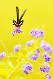 The butterfly Royalty Free Stock Photo