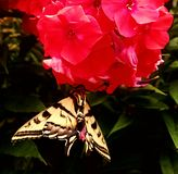 Butterfly. In the garden stock photography