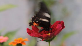 Butterfly in the garden stock video footage
