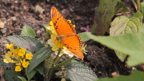 Butterfly in the garden stock video