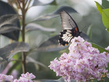 Butterfly in a garden Royalty Free Stock Photo