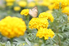 Butterfly in the garden with flower. Magical Nature around us. Ẹnjoy it ourself every time at every where stock photos