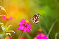 Butterfly in garden and flying to many flowers in garden, Beautiful butterfly in colorful garden or insect farm, Animal or insect Royalty Free Stock Images
