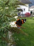 Butterfly in the garden royalty free stock images