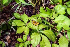Butterfly garden stock photos