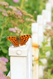 Butterfly and garden Royalty Free Stock Images
