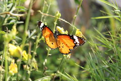 The butterfly in the garden. Royalty Free Stock Photography