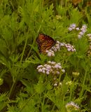 Butterfly Garden Royalty Free Stock Images
