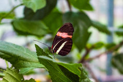 Butterfly in the garden. Sitting on a leaf Royalty Free Stock Photos