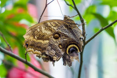 Butterfly in the garden. Sitting on a tree Royalty Free Stock Image
