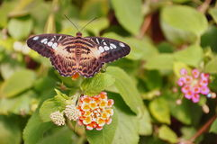 Butterfly in the Gardens. Stock Photography