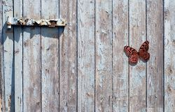 Butterfly on gate. Butterfly and an old and flaky wooden gate Stock Photography
