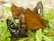 Butterfly gathering. Stock Images