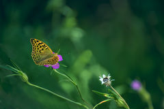 Butterfly on a gentle bright flower Stock Photos