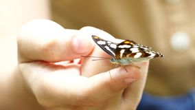 Butterfly on a girl's hand. stock video footage