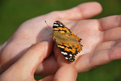 Butterfly in girl's hands. Close-up photo of a butterfly hold in a girl's hands Stock Photo