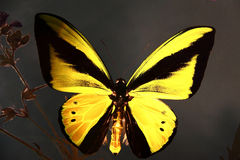 Butterfly on glass Stock Photography