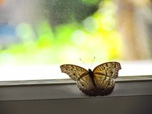 Butterfly on the glass door of home with the colorful of the background outside royalty free stock image