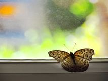 Butterfly on the glass door of home with the colorful of the background outside stock photo