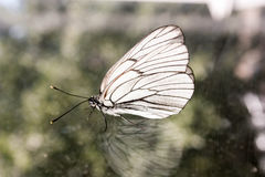 Butterfly on the glass with Stock Images