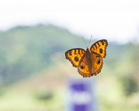 Butterfly on glass and the montain. Stock Images