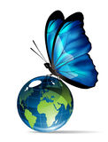 Butterfly on the globe. Butterfly is sitting on the globe Royalty Free Stock Image