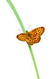 Butterfly on grass Royalty Free Stock Image