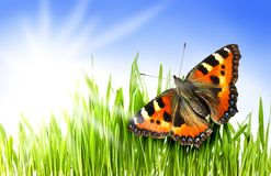 Butterfly in a grass. Butterfly on a sunny summer meadow Stock Photography
