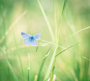 Butterfly on the grass Royalty Free Stock Photography
