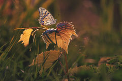 Butterfly on grass. Beautiful butterfly in my garden Royalty Free Stock Photography