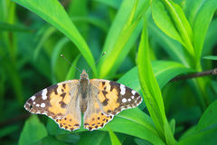 Butterfly on the grass. Beautiful butterfly on the grass, top view Royalty Free Stock Photos