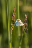 Butterfly5. Butterfly in the grass, butterflies Royalty Free Stock Photo