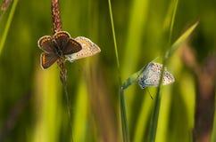 Butterfly1. Butterfly in the grass, butterflies Stock Image