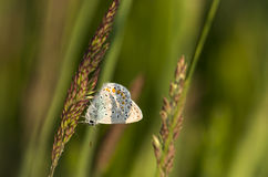 Butterfly2. Butterfly in the grass, butterflies Royalty Free Stock Image