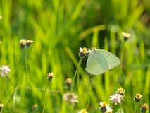 Butterfly on grass flower Royalty Free Stock Photo