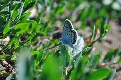 Бабочка сидящая на траве в поле royalty free stock images