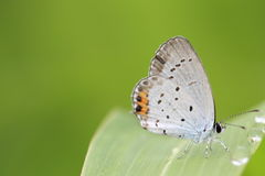 Butterfly on a grass Royalty Free Stock Photo