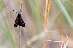 Butterfly. A butterfly on the grass. Shot in Lido Morelli, Fasano, Apulia, Italy royalty free stock photo