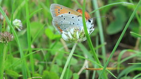 Butterfly in grass stock footage