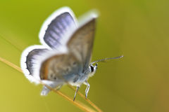 Butterfly. Butterfly on the grass.Small depth of sharpness Stock Photography
