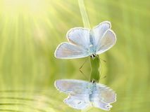 Butterfly on a grass in spring. Beautiful Butterfly in the warm rays of morning sun in spring stock images