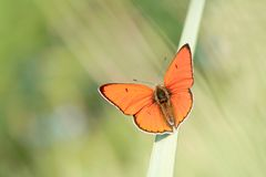 Butterfly on a grass in the sun rays Royalty Free Stock Photos