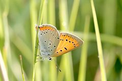 Butterfly on a grass in the sun rays Stock Images