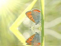 Butterfly on a grass in the sun rays Stock Photography