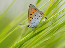 Butterfly in the grass Stock Photography