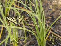 Butterfly on Grass Stock Photo