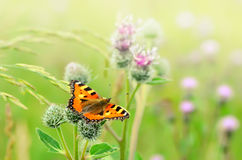 Butterfly on Great Burdock Royalty Free Stock Photos
